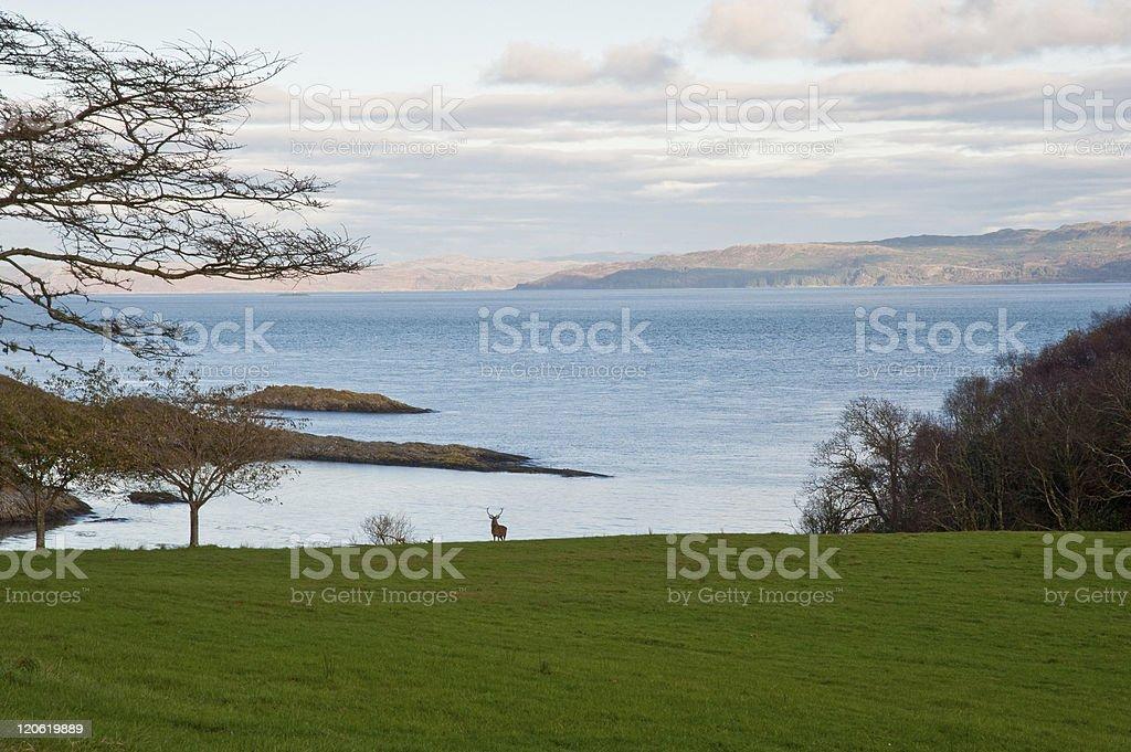 Jura shoreline stock photo