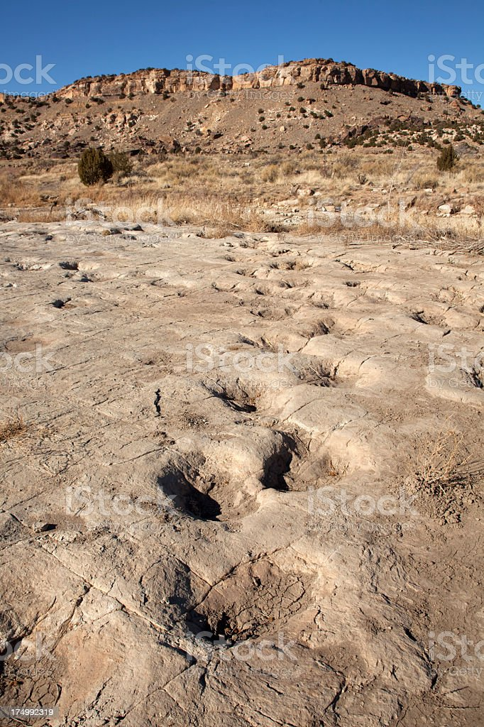 Jurassic Apatosaurus sauropod dinosaur tracksite Colorado royalty-free stock photo