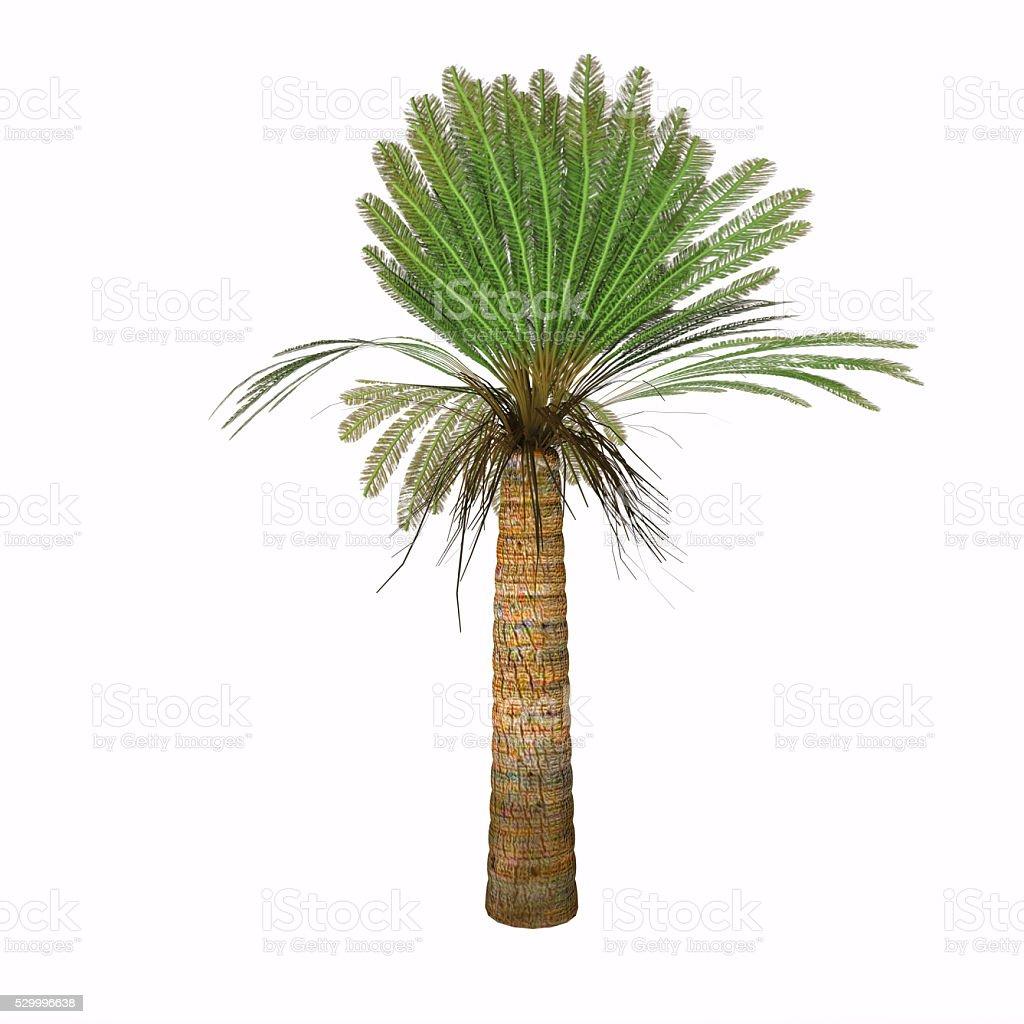 Jurassic Cycad Plant stock photo