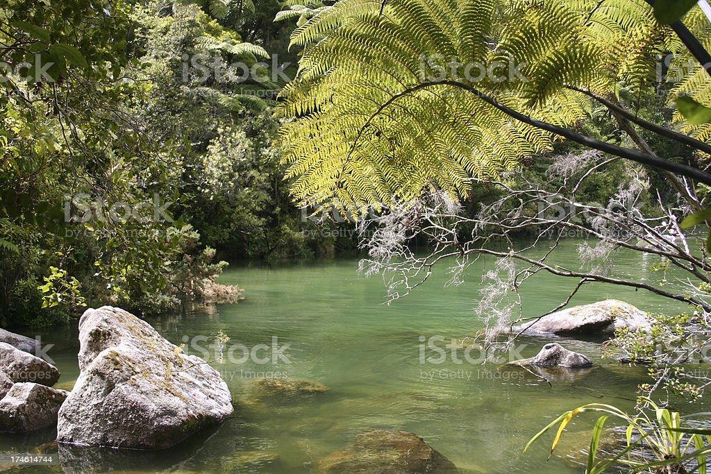 Jurassic dinosaur forest stock photo
