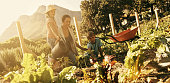 Shot of a mother and children working in a vegetable gardenhttp://195.154.178.81/DATA/i_collage/pu/shoots/805883.jpg