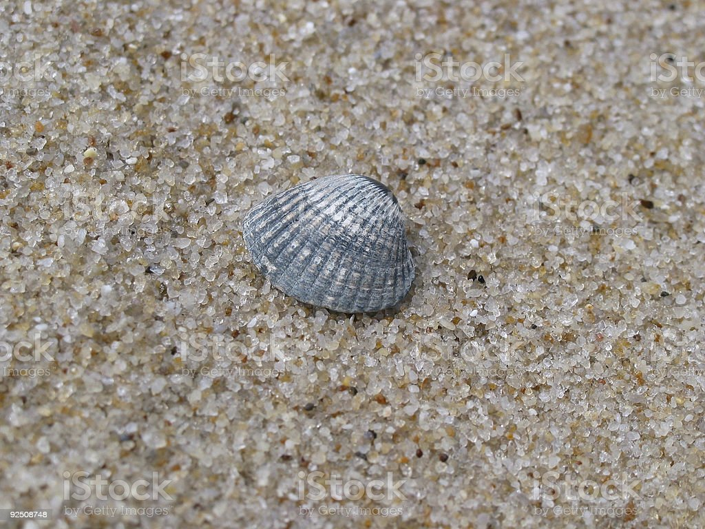 Just a shell royalty-free stock photo