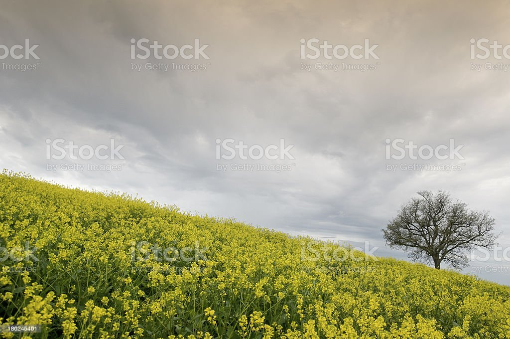 Just a tree royalty-free stock photo