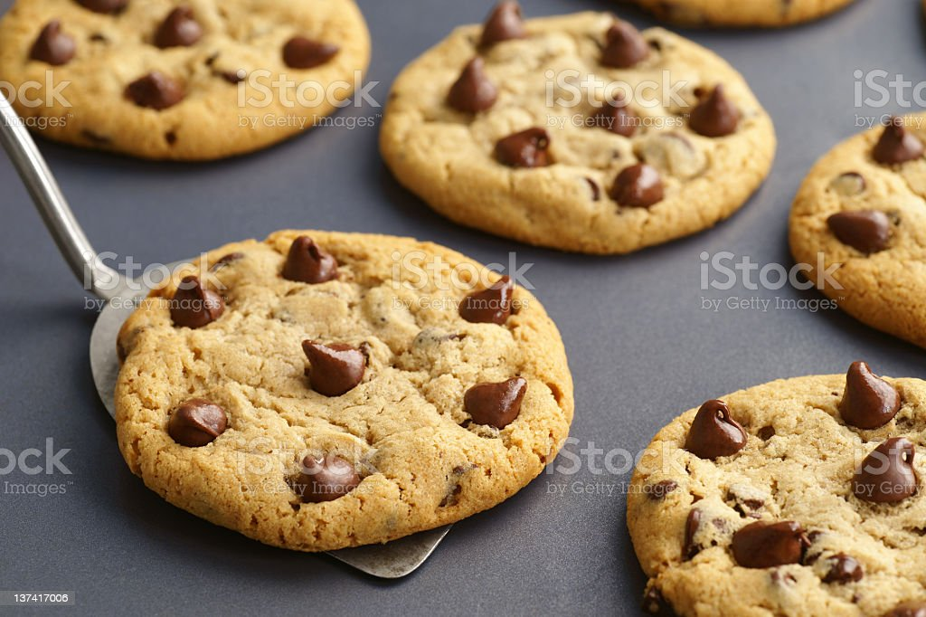 Just Baked Chocolate Chip Cookies on Baking Sheet royalty-free stock photo