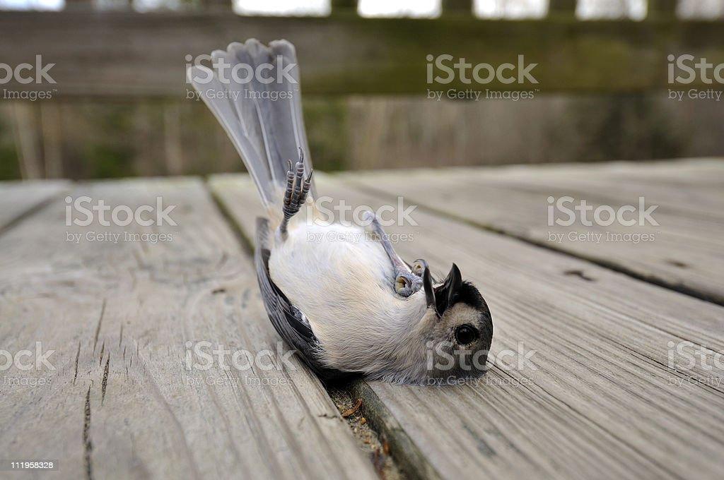 Just Laying Around stock photo