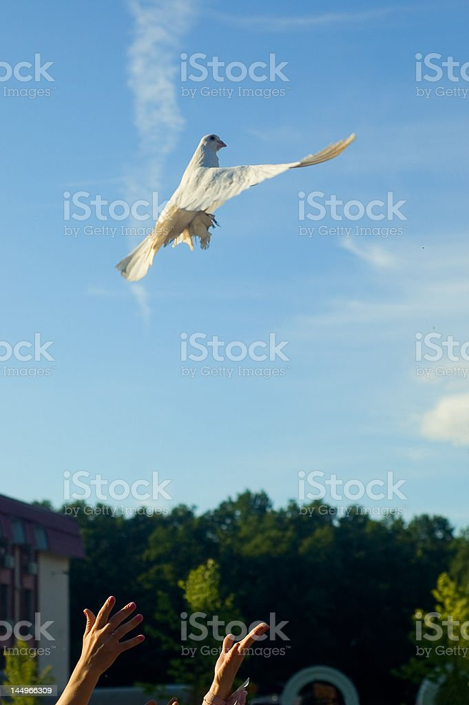 Just Married let the pidgeon fly away stock photo
