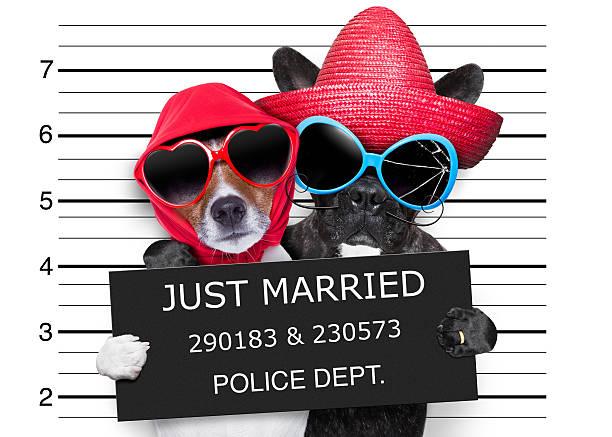 just married mugshot - heiratssprüche stock-fotos und bilder