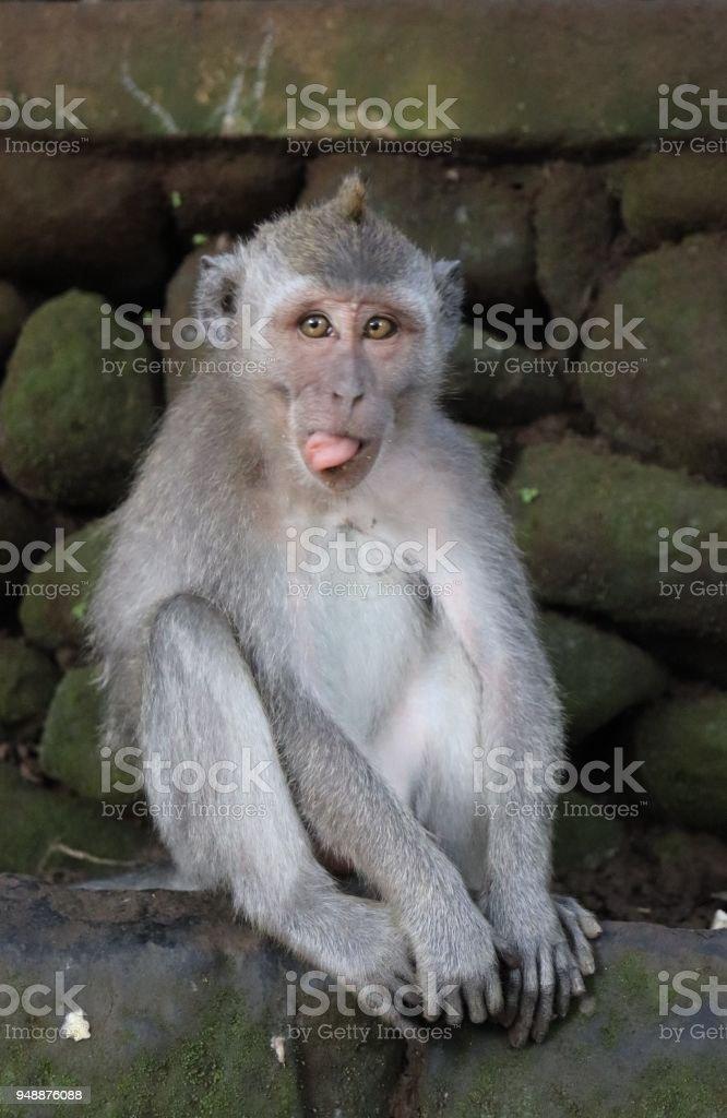 Just Monkeying Around stock photo