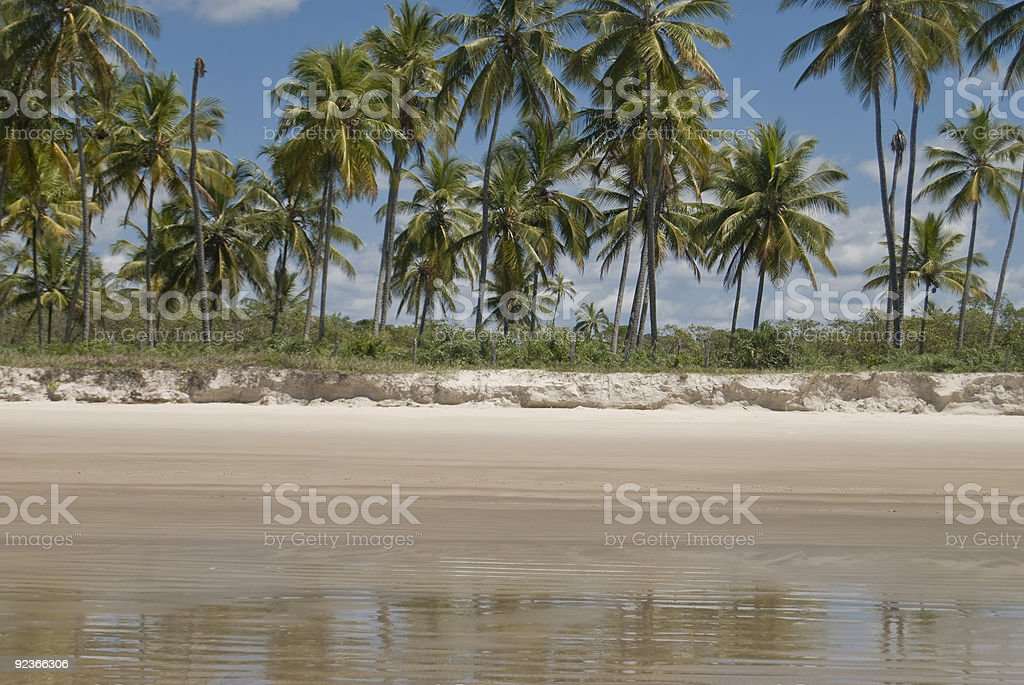 Just palm trees an beach royalty-free stock photo