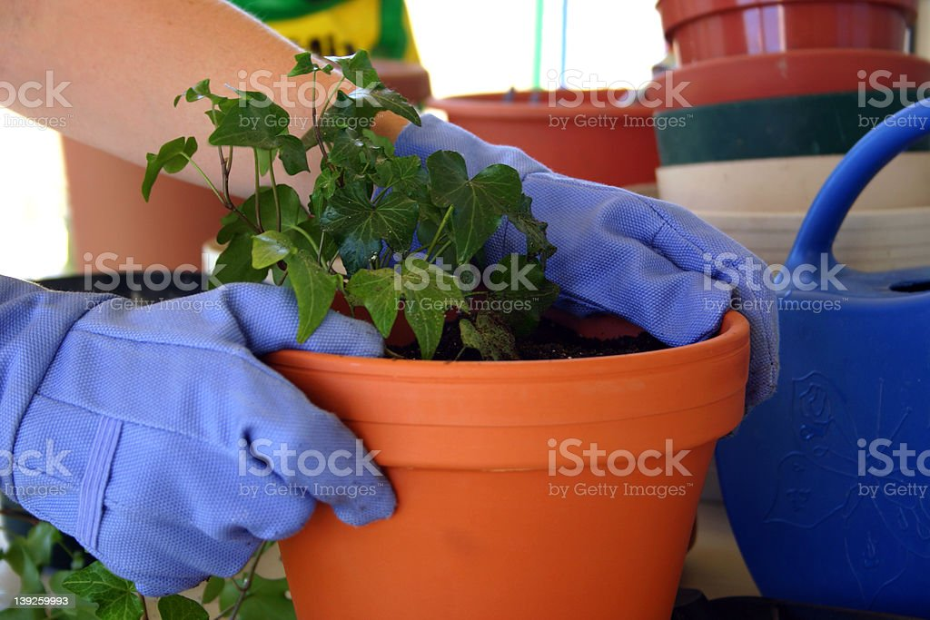 Just potted royalty-free stock photo