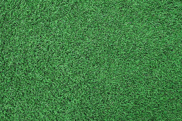 Pics Of The Grass Blade Texture Stock Photos, Pictures & Royalty