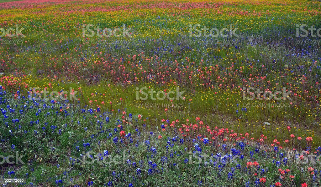 Just Wildflowers stock photo