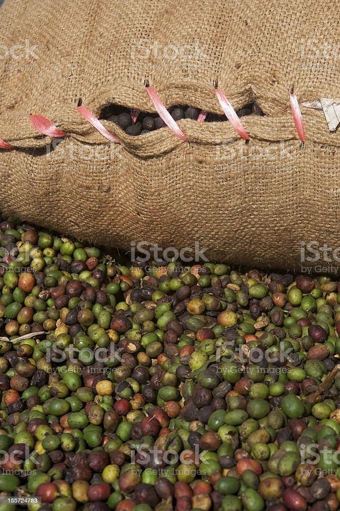 Jute sack full of arabica coffee at Bolaven Plateau, Laos royalty-free stock photo