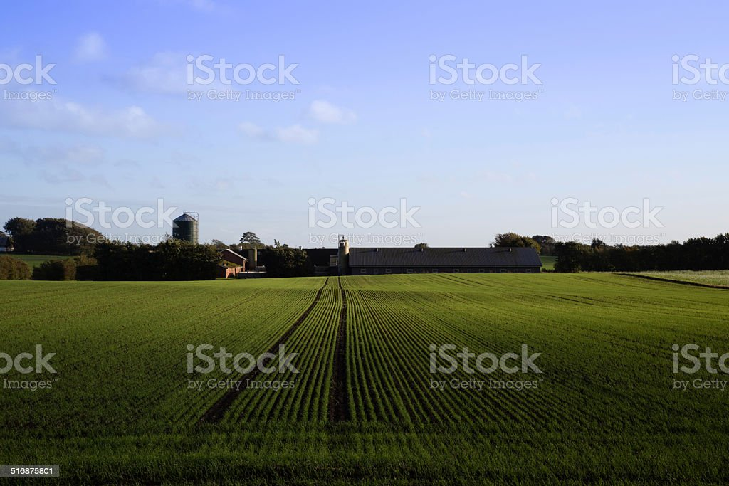 Jutland Farm - Photo