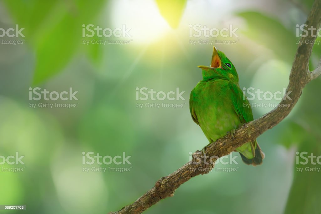 Image result for images bird singing leaves branches
