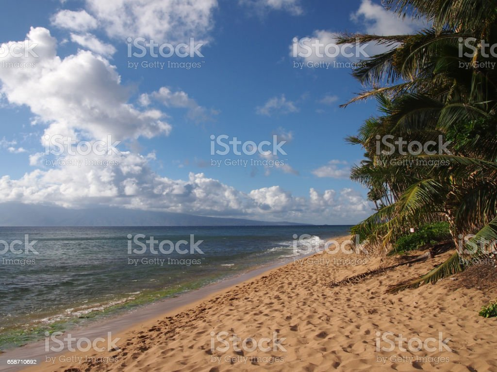 Kaanapali Beach with gentle waves and Coconut trees stock photo