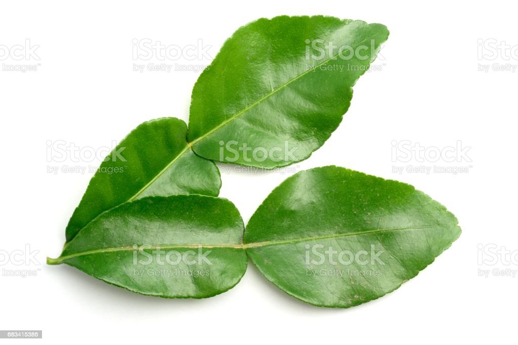 Kaffir leaves from above stock photo