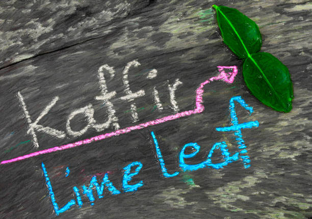 kaffir lime leaf  in caryon paint style - omg stock photos and pictures