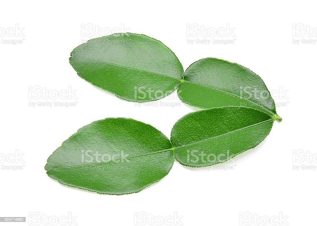 Kaffir lime leaf isolated on white background stock photo