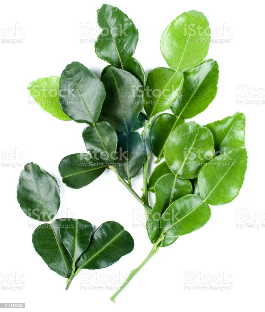 Kaffir Lime Leafs stock photo
