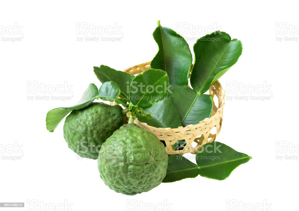 Kaffir lime leaves and fruit in a small basket woven from bamboo on white background. stock photo