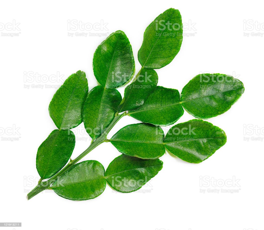 Kaffir Lime Leaves Stock Photo Download Image Now Istock,How To Make Jalapeno Poppers With Cream Cheese