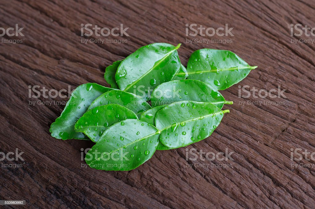 Kaffir lime leaves stock photo