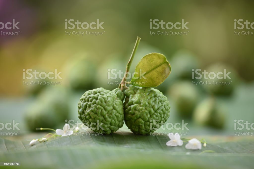 Kaffirlime stock photo