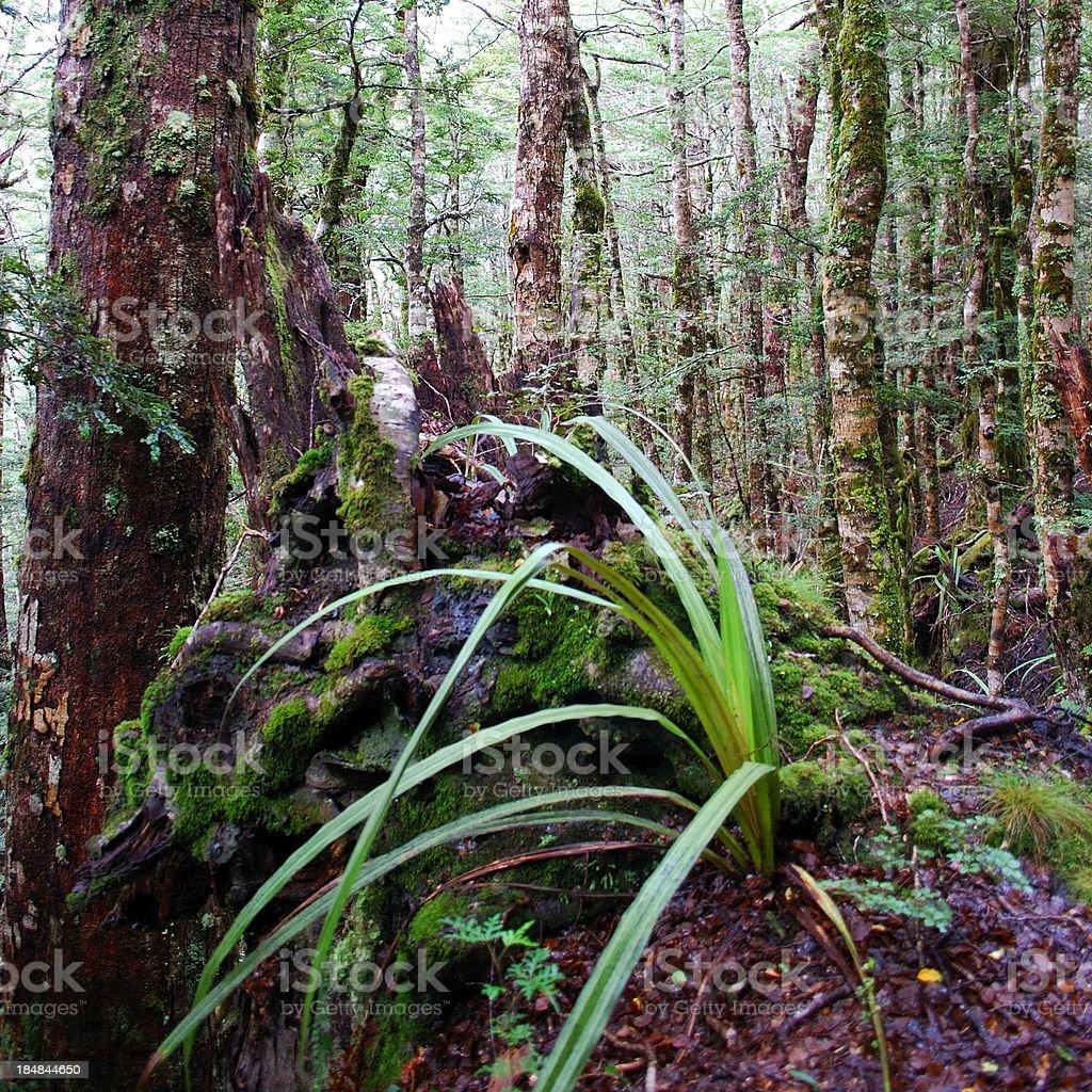 Kahurangi National Park Flora stock photo