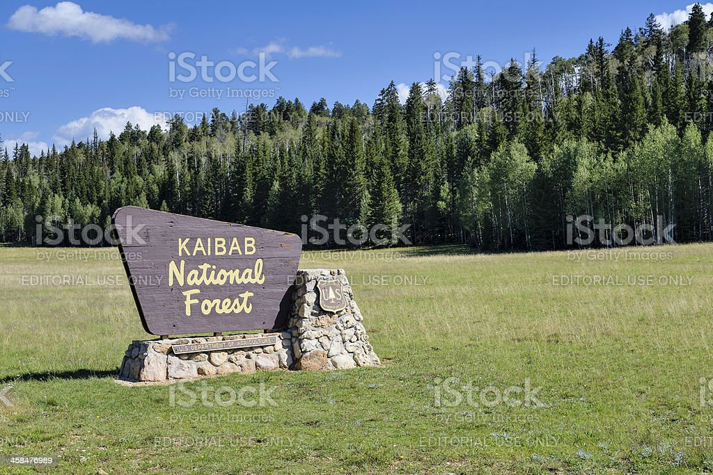 Kaibab National Forest royalty-free stock photo