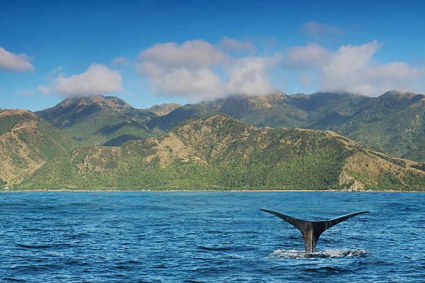 Kaikoura-Observation des baleines - Photo