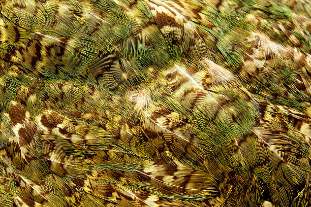 Kakapo parrot feathers stock photo