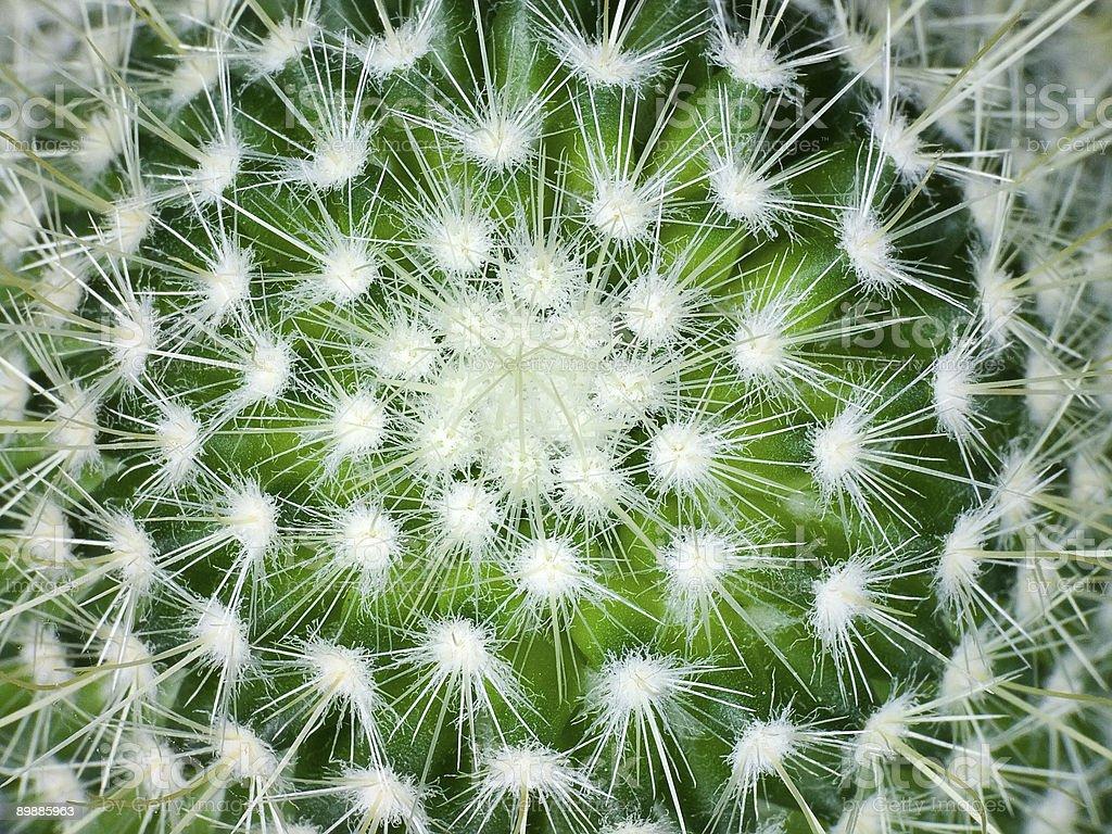 Kaktus foto de stock libre de derechos