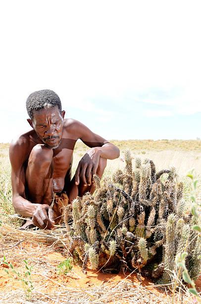 Kalahari Buschman Schneiden hoodia Porträt – Foto