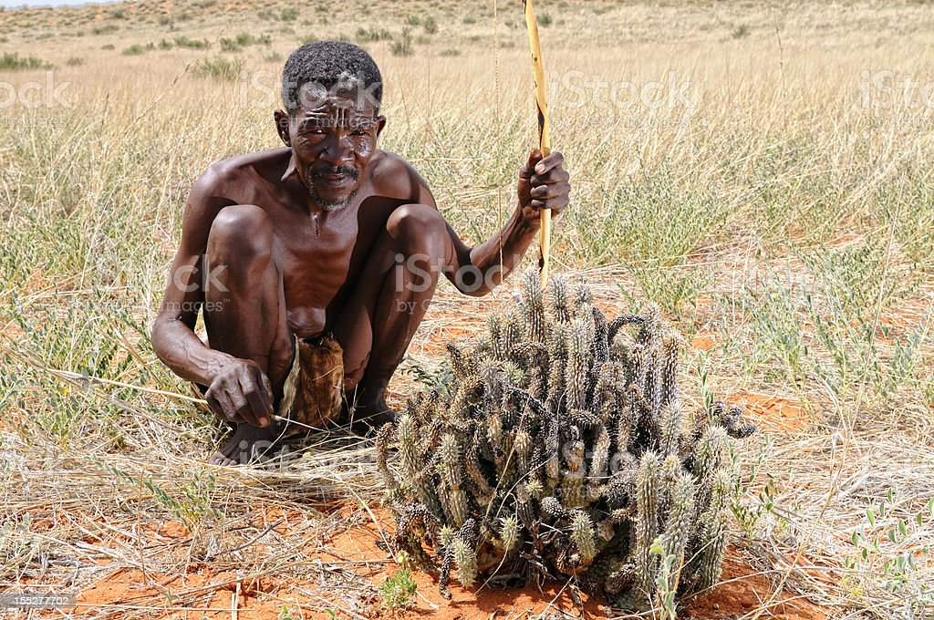 Kalahari bushman with hoodia plant landscape stock photo