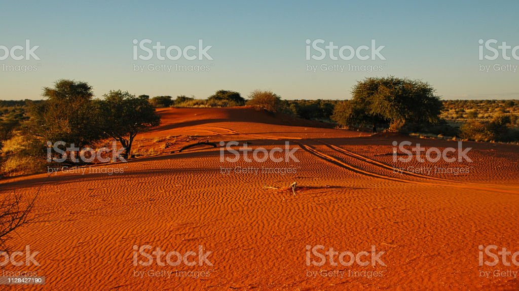 Kalahari desert - sand ripples and tire tracks stock photo
