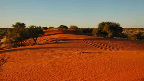 Kalahari desert - sand ripples and tire tracks stock photo