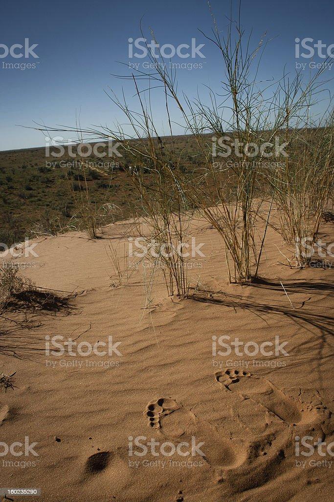 Kalahari Dune scape royalty-free stock photo