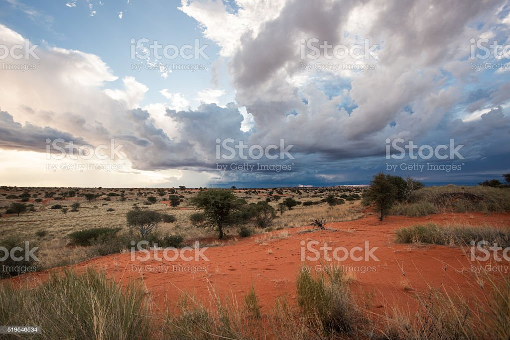 Kalahari Namibia stock photo