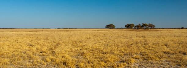 喀拉哈裡沙漠 - 平原 個照片及圖片檔