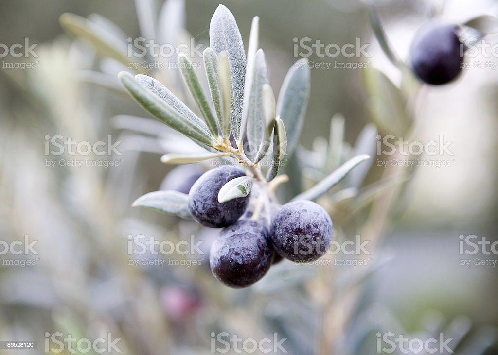 Kalamata olives royalty-free stock photo