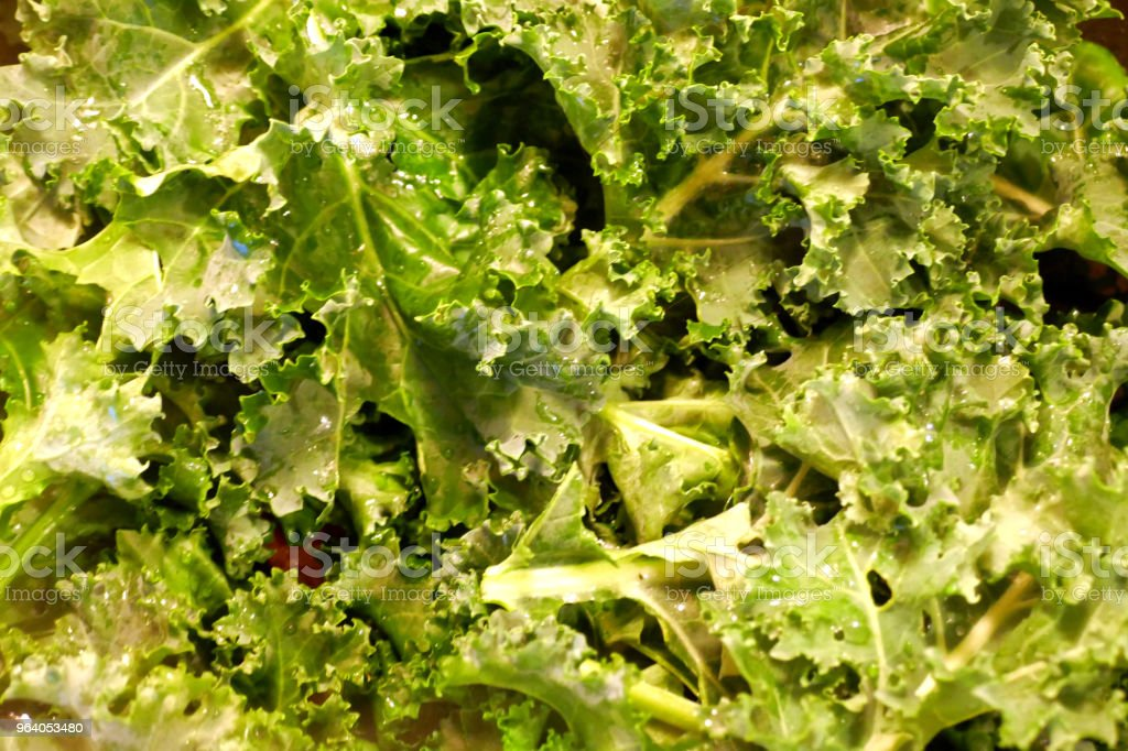 Kale abstract - Royalty-free Cabbage Stock Photo