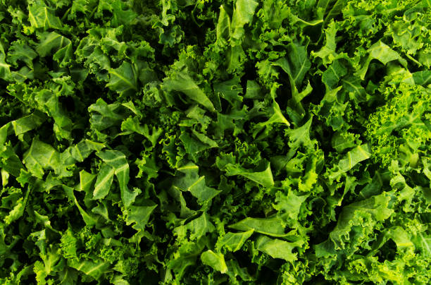 Kale Background stock photo