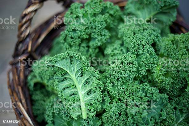 Kale Green cabbage in rustic basket on daylight winter vegetables