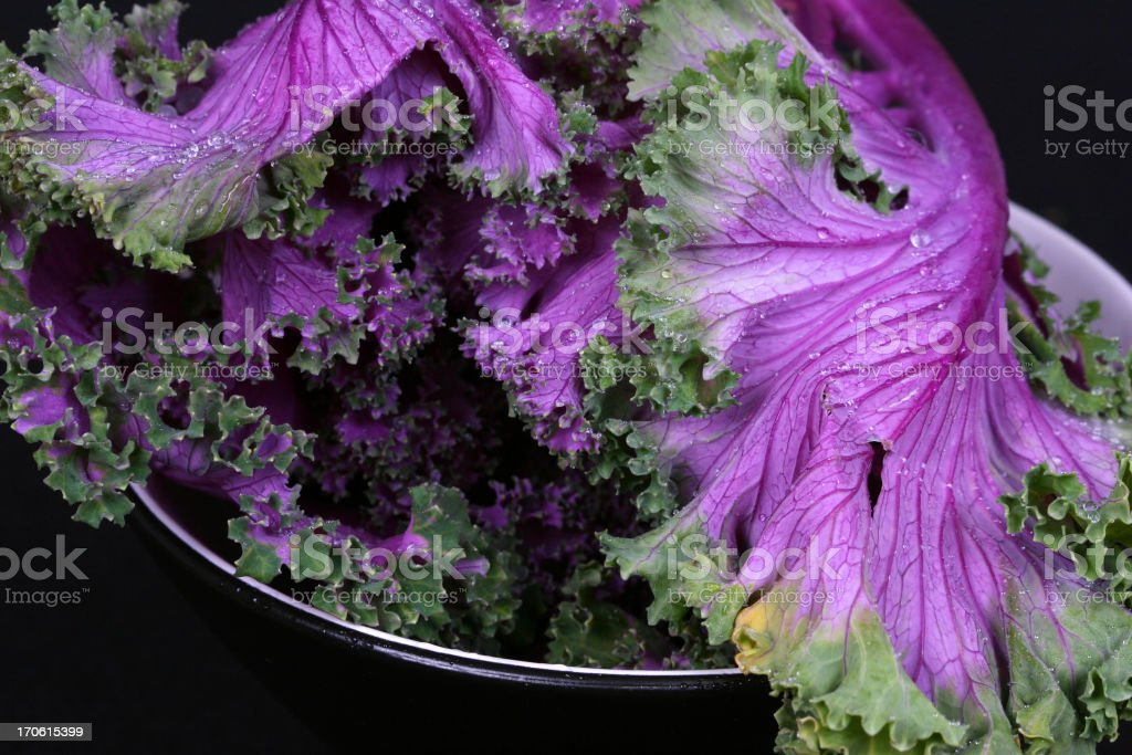 Kale Leaves - Low Key royalty-free stock photo