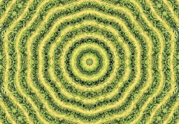 Kaleidoskop-Mais-Reihen – Foto