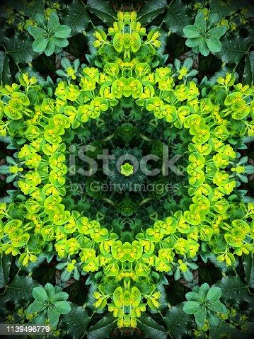 Kaleidoscope pattern with   Euphorbia myrsinitis blooming in springtime.