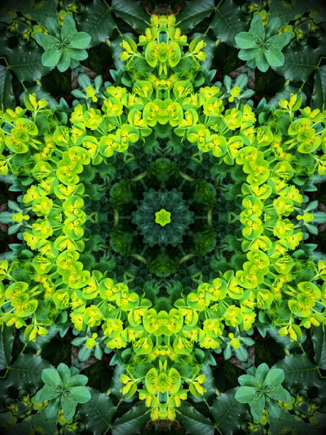 Kaleidoscope flower pattern stock photo