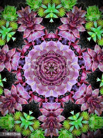 Kaleidoscope  pattern with purple and green  succulent plants.