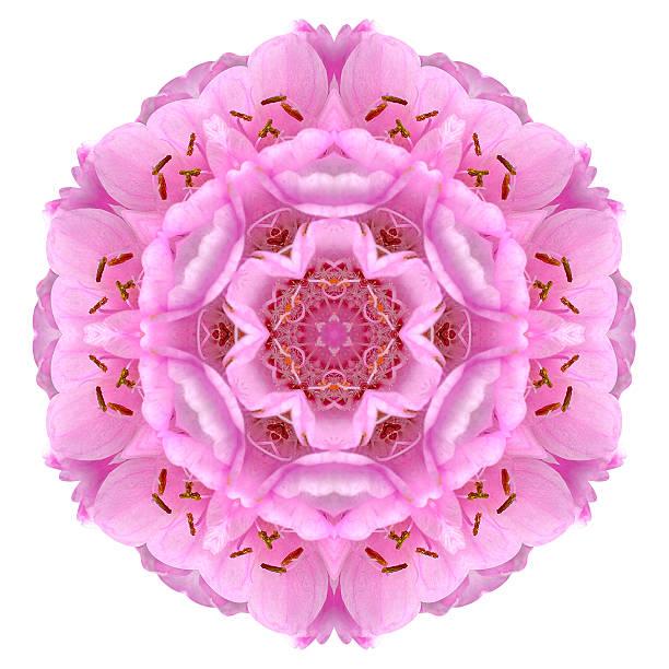 kaleidoskopischen ball dombeya mandala-blumen, isoliert auf weiss - buddhist tattoos stock-fotos und bilder